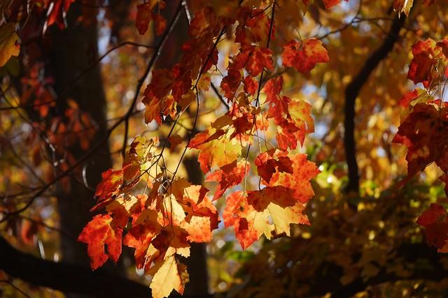 日, 2015-11-01 14:48 - Tillman Mountain State Park