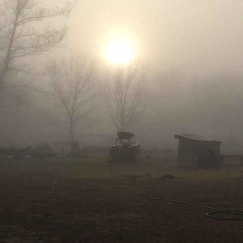 sunrise farm foggy spooky uploaded:by=flickstagram instagram:venuename=whirlawayfarm instagram:venue=42607276 instagram:photo=902158156513303448144513221