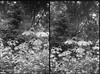 Old film - 120 - B&W