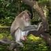 monkey forest ubud 22feb2017 33
