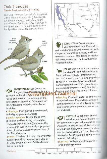 Backyard Birds p146 Oak Titmouse