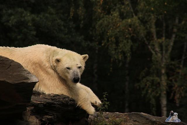 Tierpark Berlin 23.08.2015  0210