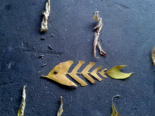 16. Сделать скелетики рыб из опавших листьев