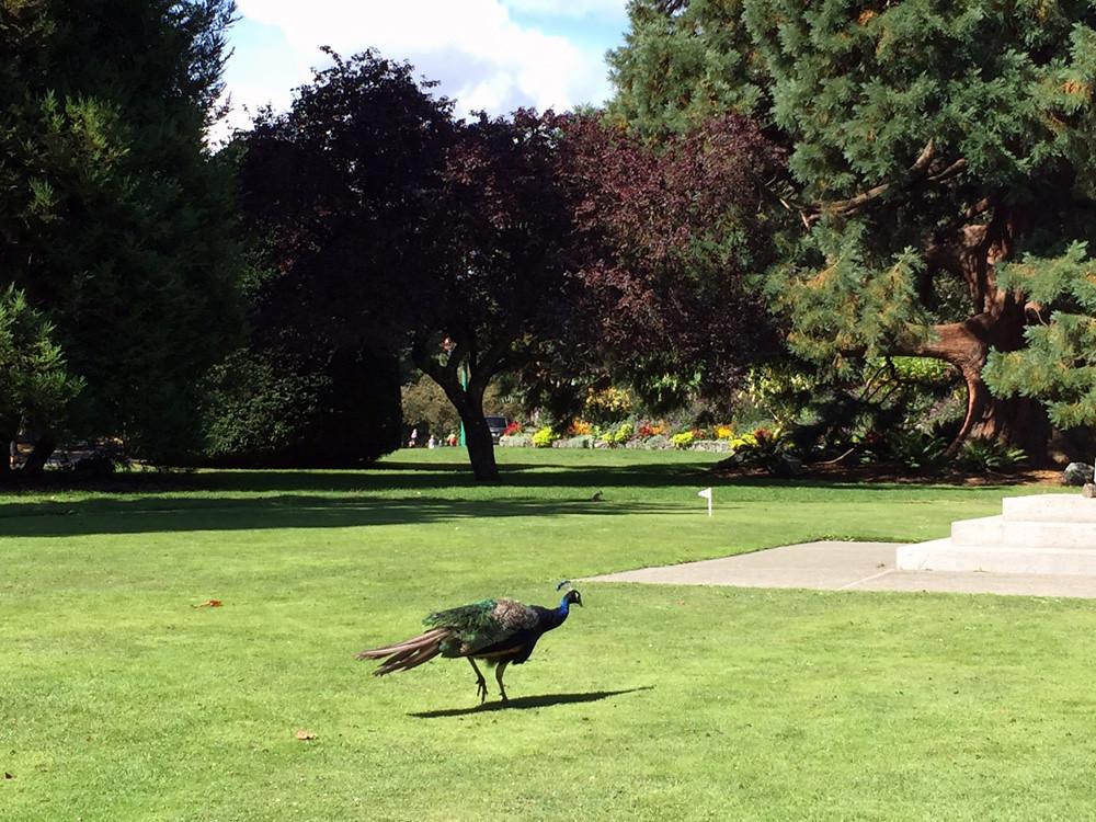 Beacon Hill Park 1