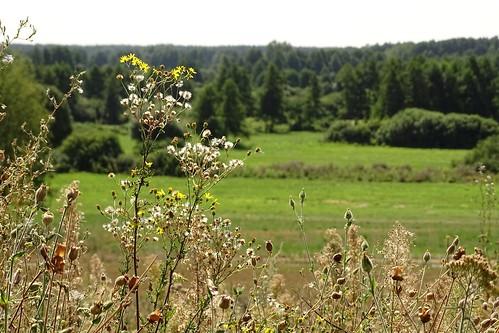 flowers summer hot green nature landscape view meadow poland polska