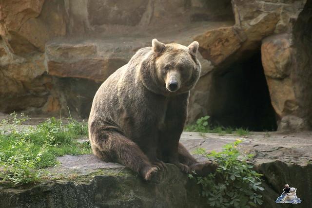 Zoo Berlin 18.09.2015   0116