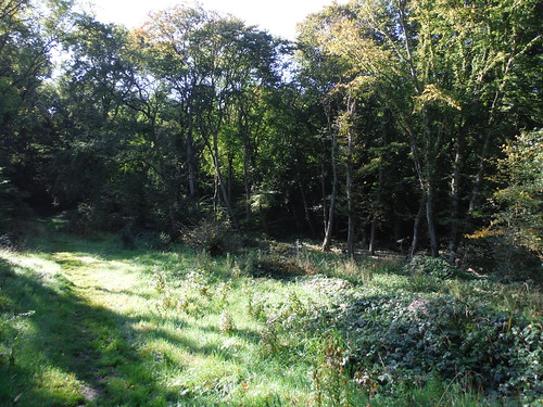 Marks Hill Nature Reserve, Clearing (II)