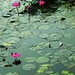 1514. Pink Lily by profmpc