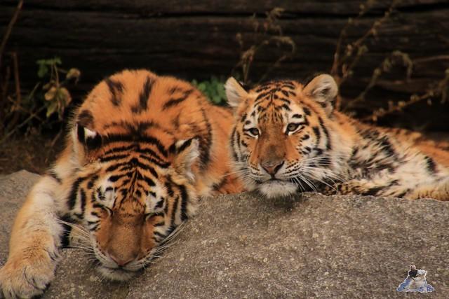 Tierpark Berlin 18.10.2015  0128