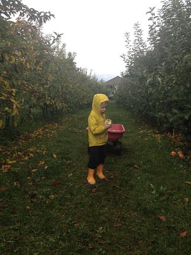 Kiyokawa Orchards