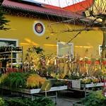 Gartenharmonie (121)