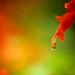 DSCN2822 Red Salvia by Beesgarden68