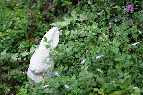 ウサギのかくれんぼ a rabbit in the bush