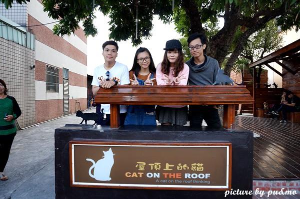 屋頂上的貓 (7)