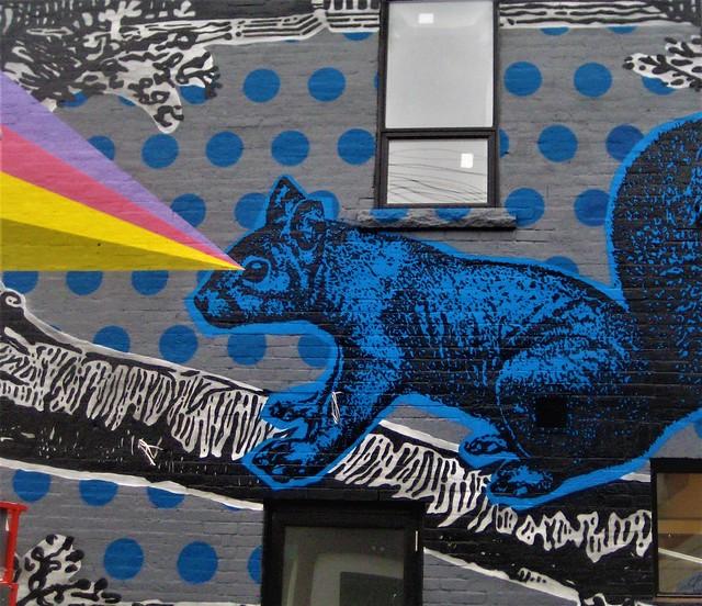 blue squirrel