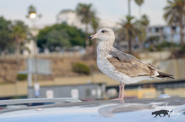 Santa Monica Pier 12-4-16