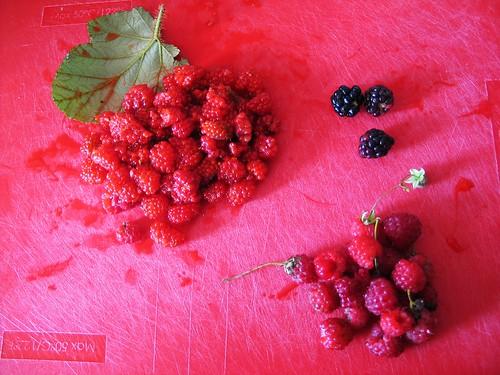 Foraged salmonberries, raspberries and brambles