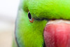 macro bird by nzfisher