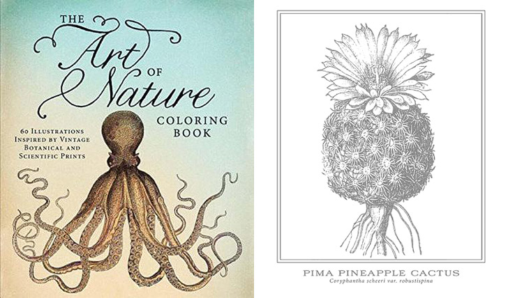 The Art of Nature + 11 Beautiful Adult Coloring Books for Great Stay At Home Date Night Ideas.
