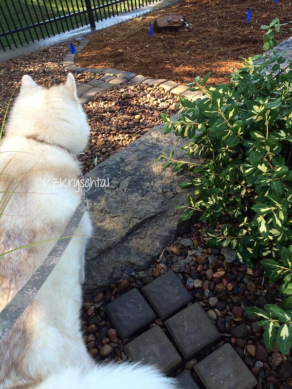 IMG_2361CamWildflowerGarden