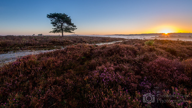 Ibsley Common - New Forest
