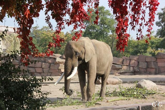 Sonntags-Besuch im Tierpark Friedrichsfelde 04.10.201548