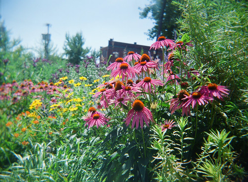 Manos Community Garden