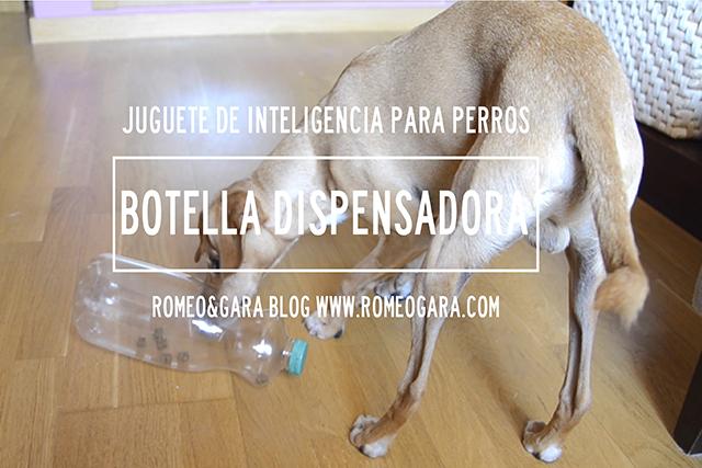 Juego casero para perros: Botella dispensadora