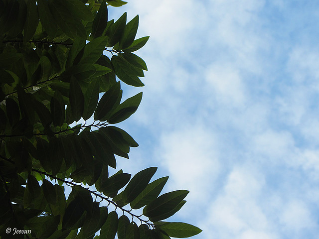 Sky and leaves
