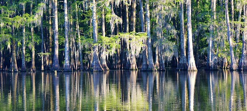 trees lake nature nikon louisiana cypresstrees d3200