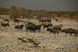 Varied Wildlife of Etosha