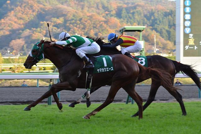 20151115福島11R 福島記念 ヤマカツエース Yamakatsu Ace(JPN)