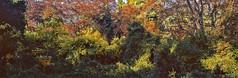 Fall Color, Tatoi