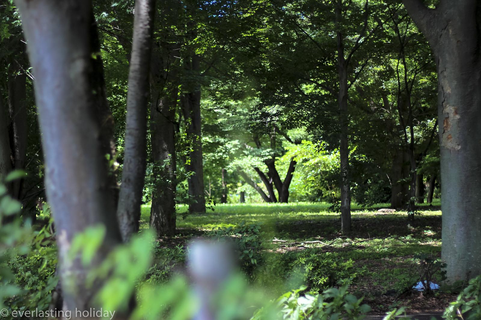 小金井公園 Koganei Park-0001