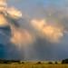 "there goes the rain by Scott Stringham ""Rustling Leaf Design"""