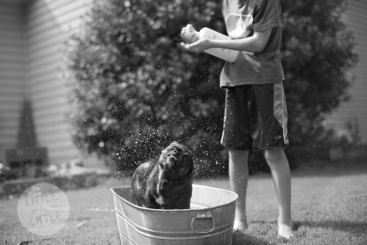 rosie gets a bath 02-blog