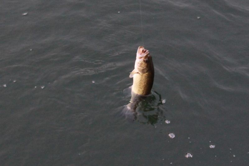 gg camping 19 fish 7