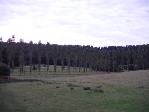 Squalls Estate