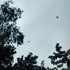 #bird #flying #through #trees