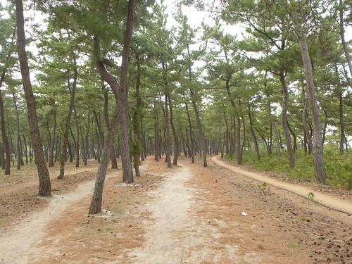 Co-Gangneung-Gyeongpo-Pinède (2)