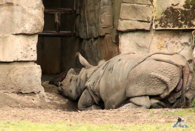 Tierpark Berlin 20.09.2015  037