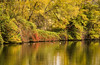 Ducks in the Fall by EvanJphotography1