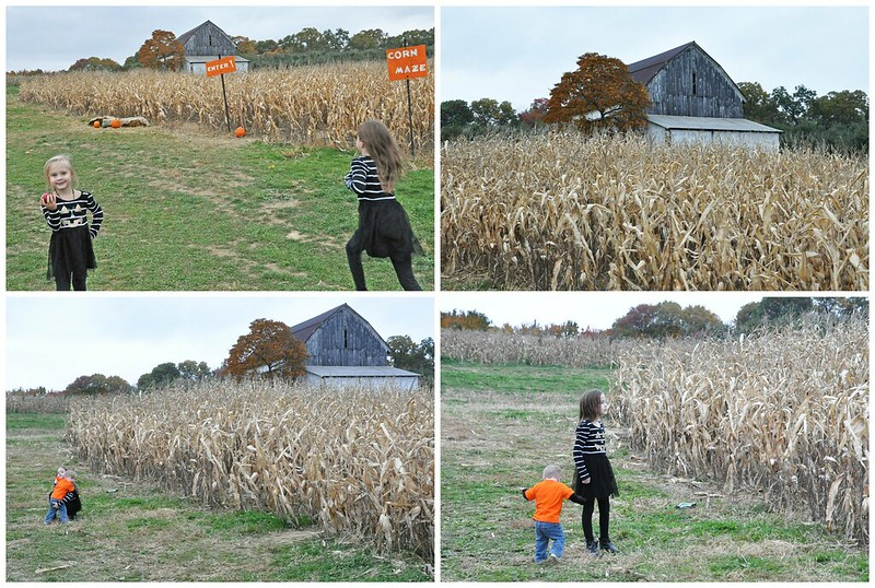 Corn Maze and Pumpkin Patch