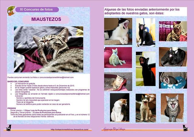 "11º Concurso Fotográfico: ""Miaustezos"" Bases y Fotos participantes. 22379521632_155d2cb994_z"