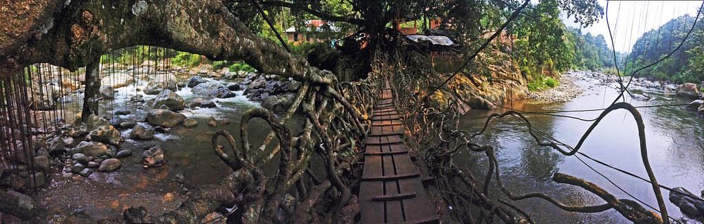 The Root Bridge II
