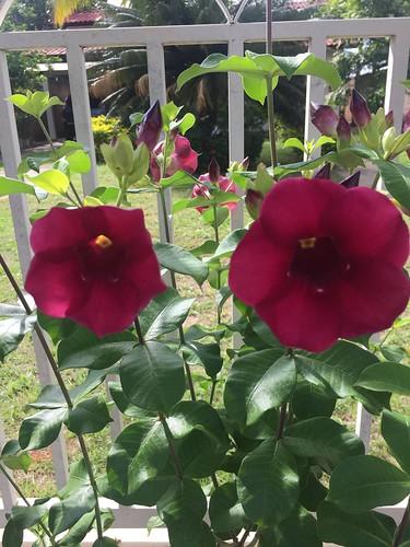 My flours.. my Garden