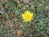 Lonely yellow flower