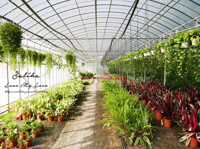 宜蘭一日遊旅遊景點仁山植物園 (16)