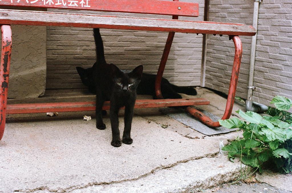 貓 相島 Ainoshima, Fukuoka 2015/09/02 小黑貓躲在椅子下面,那時候我剛從郵便局出來。  Nikon FM2 / 50mm AGFA VISTAPlus ISO400 Photo by Toomore