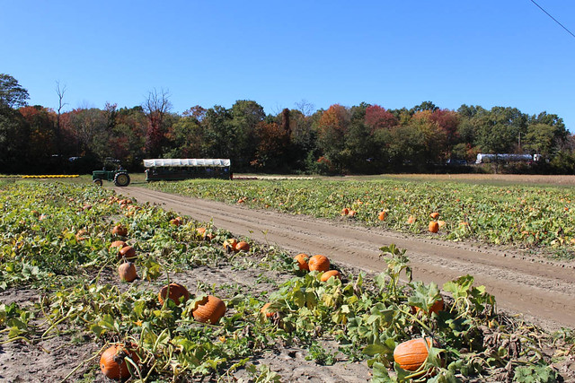 pumpkin patch 2015-6